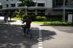 look out trafic (kadok_tupac) Tags: nikonphotography nikon d3300 streetphotography 35