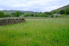 Welcome to Yorkshire (Adam Swaine) Tags: thedales yorkshire northyorkshire counties countryside fields england english englishlandscapes britain british beautiful nature flora flowers meadows englishmeadows northeast uk ukcounties stonewall pennines walks countrylanes county aonb