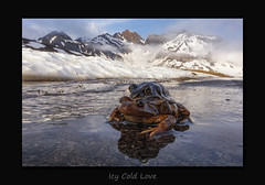 Icy Cold Love (MC--80) Tags: icy cold love swiss mountains