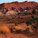 Desert Flaora and Colorful Geology