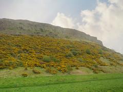 Arthur's Seat #2 (jimsawthat) Tags: enhanced gorse volcanic urban edinburgh uk unitedkingdom scotland