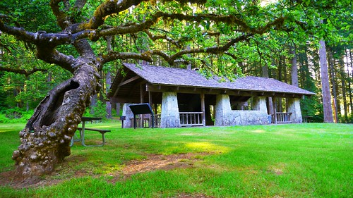 Old apple tree and picnic shelter in Silver Falls State Park