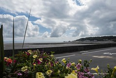 Flowers in Mumbles 2019 06 15 #2 (Gareth Lovering Photography 5,000,061) Tags: mumbles braceletbay limesladebay swansea seaside beach sony rx100 va garethloveringphotography