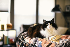Couch sitting (tyle_r) Tags: vscofilm cat june 2019 pipsqueak wisconsin