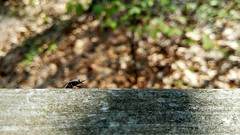 (Dubstepmeowski) Tags: macro bugs click beetle photography insects outside