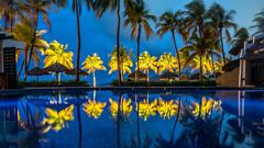 Pool and Palm Trees at Thompson Zihuatanejo (nan palmero) Tags: hyatt thompsonhotels thompsonzihuatanejohotel sony sonya7riii sonyalpha fullframe zihuatanejo mexico zihua travel visitmexico palmtrees guerrero pacific playalaropa sunrise