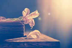 Spring stories (Ro Cafe) Tags: dark nikkor105mmf28 peruvianlily sonya7iii stilllife darkmood flower naturallight oldbook petals wood table rustic romantic vintage