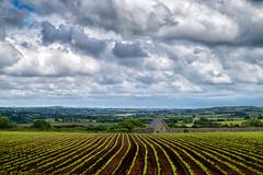 Aligner de conserve (Dalt-Gilles) Tags: nacreimagesstagesphotos stagesphotos coursphoto formationphoto bretagne champ maïs