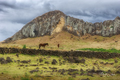 Towards Rano Raraku (marko.erman) Tags: rapanui easterisland pacific ocean chile ranoraraku island remote isolated faraway volcano mountain horses nature landscape outdoor outside travel sony beautiful volcanic lostcivilisation