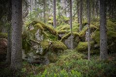Alakoitajoki - Finland (Sami Niemeläinen (instagram: santtujns)) Tags: joensuu suomi finland alakoitajoki pamilonkoski river rapids nature luonto hiking outdoors retkeily ulkoilu joki koski metsä forest uimaharju