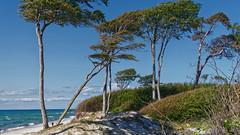 4A_DSC05476 (blende2006) Tags: horizonte zingst dars windflüchter totholz wald meer strand seebrücke landschaft sony rx100