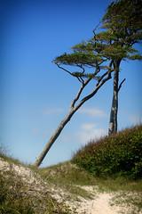 4A_DSC05457 (blende2006) Tags: horizonte zingst dars windflüchter wald meer strand landschaft sony rx100