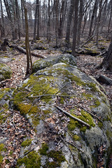 mossy boulder at swamp edge (ophis) Tags: milton miltontownforest