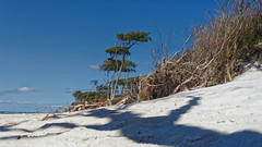 4A_DSC05469 (blende2006) Tags: horizonte zingst dars windflüchter wald meer strand landschaft sony rx100