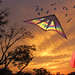 Kite Flying with the Birds