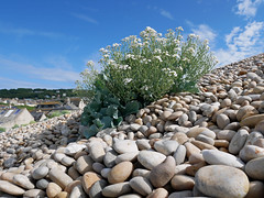 Chiswell, Portland 24/365 (auroradawn61) Tags: chiswell weymouthandportland dorset uk england june summer 2019 coast lumixgx80 chesilbeach pebbles 52weeksin2019