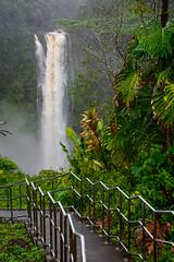 Akaka Falls (mikeperryphotography) Tags: akaka akakafalls waterfall stairway stairwaytowaterfall hawaii hawaiiwaterfall bigisland hawaiibigisland tropics tropical tropicalrainforest nature lush