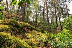 Rando des 25 bosses, Fontainebleau (schneider_sebastien) Tags: foret fontainebleau 25bosses randonnée seineetmarne 77 îledefrance bois mousse vert canon77d canon 18135mm eos77d eos arbre verdure