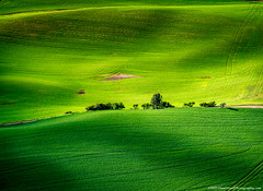 20190608 Id Palouse Ariel-0071 (Dan_Girard_Photography) Tags: 2019 airelphotography green landscape light nature palouse shadow texture yellow