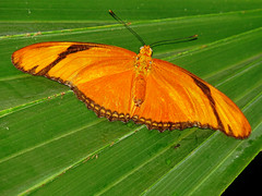 IMG_7342 (kennethkonica) Tags: nature animalplanet animal animaleyes autumn canonpowershot canon usa america midwest indianapolis indiana indy color outdoor wildlife butterfly wings green orange macro