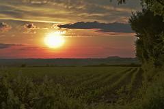 Couché de soleil sur Olne (Jean-Yves Ledy) Tags: sun soleil couché olne liège belgique champ paysage nuage couleur golden