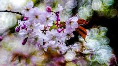 Meyer Trioplan - 6927 (✵ΨᗩSᗰIᘉᗴ HᗴᘉS✵62 000 000 THXS) Tags: meyer trioplan flora flower nature belgium europa aaa namuroise look photo friends be yasminehens interest eu fr party greatphotographers lanamuroise flickering sliderssunday hss