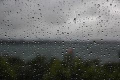 Gotas de Entre Lagos (Diego_Valdivia) Tags: entrelagos loslagos chile lluvia rain verano frio cold summer nature landscape gotas raindrops canon eos 60d