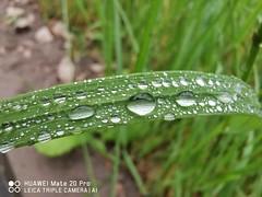 #waterdroplets #macro #photography #shot #mate20pro #mate20prophoto #mate20pro_camera #Huaweimate20Pro #huaweiphoto #huawei_pic #huaweishot #huaweiphotographers #huawei @huaweimobile @huaweideviceusa @huaweimobileuk @huaweinextimage @huawei #LoveMyHuawei (kadafione1234) Tags: macro mate20prophoto huaweishot lovemyhuawei shot waterdroplets mate20procamera huaweipic huaweiphotographers huawei mate20pro huaweiphoto huaweimate20pro photography