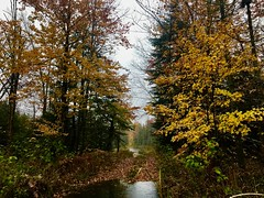 wet and changing (ewalker0298) Tags: wet rain fall colors capture angle photography moment shot tree road