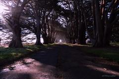 Cypress Tree Tunnel (soundstruck) Tags: pointreyesnationalseashore cypresstreetunnel landscape