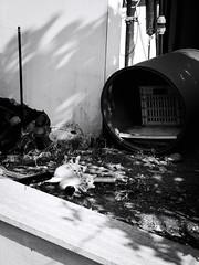 GFX1521 - Siblings (Diego Rosato) Tags: sibling fratello gatto cat pet animali animal kitten randagio stray giardino garden bianconero blackwhite fuji gfx50r fujinon gf110mm rawtherapee