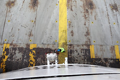 Two hands on deck (Elios.k) Tags: horizontal outdoors people oneperson man crew atwork seaman helmet vet safety deck metallic rust rusty yellow dfds perspective birdeyeview lookingdown upperdeck boat ferry atsea colour color travel travelling march 2018 vacation canon camera photography canon5dmkii englishchannel calais dover france uk england unitedkingdom europe