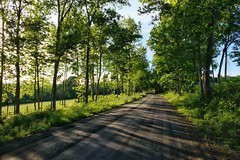 (placeinsun) Tags: vermont middlebury spring landscape dirtroad trees light green
