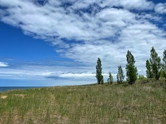 Edge of the Trees (mswan777) Tags: dune grass tree sky water cloud green blue white landscape summer shore coast apple iphone iphoneography mobile michigan nature outdoor