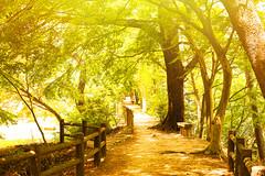 Sunlight Path (moaan) Tags: kobe hyogo japan tree green path sunlight nopeople season june leica leicamp type240 noctilux 50mm f10 noctilux50mmf10 leicanoctilux50mmf10 utata 2019