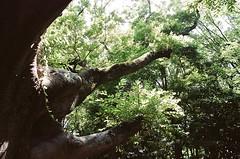 Nikon New FM2 × KODAK PORTRA 160 (oi (oichanahcio)) Tags: nikon newfm2 kodak portra160 35mm film filmisnotdead filmcamera filmphotography filmshooters filmforever istillshootfilm ishootfilm ilovefilm iusefilm shizuoka japan