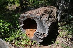 AU3A2232 (MegachromeImages) Tags: natural bridge rogue river or oregon basalt lava rock gorge