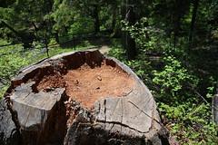 AU3A2231 (MegachromeImages) Tags: natural bridge rogue river or oregon basalt lava rock gorge