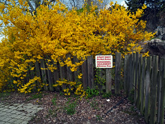 (geowelch) Tags: toronto ontarioplace fence shrubs flowering signs fujifilmx10