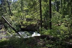 AU3A2228 (MegachromeImages) Tags: natural bridge rogue river or oregon basalt lava rock gorge