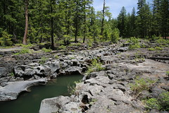 AU3A2312 (MegachromeImages) Tags: rogue river or oregon gorge basalt lava rock tree water