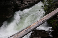 AU3A2311 (MegachromeImages) Tags: rogue river or oregon gorge basalt lava rock tree water