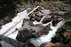 AU3A2304 (MegachromeImages) Tags: rogue river or oregon gorge basalt lava rock tree water