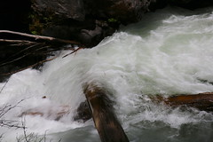 AU3A2309 (MegachromeImages) Tags: rogue river or oregon gorge basalt lava rock tree water