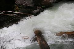 AU3A2308 (MegachromeImages) Tags: rogue river or oregon gorge basalt lava rock tree water