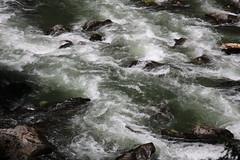 AU3A2343 (MegachromeImages) Tags: rogue river or oregon gorge basalt lava rock tree water