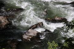 AU3A2341 (MegachromeImages) Tags: rogue river or oregon gorge basalt lava rock tree water