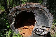 AU3A2234 (MegachromeImages) Tags: natural bridge rogue river or oregon basalt lava rock gorge