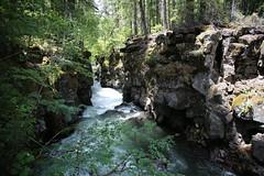 AU3A2331 (MegachromeImages) Tags: rogue river or oregon gorge basalt lava rock tree water