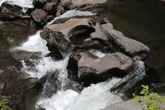 AU3A2315 (MegachromeImages) Tags: rogue river or oregon gorge basalt lava rock tree water